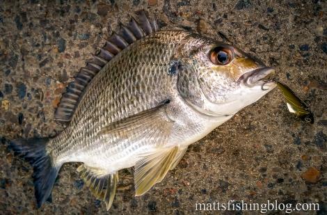 20150523 Narrabeen Lake 10