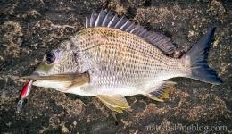 Narrabeen Lake 20150509 - 002