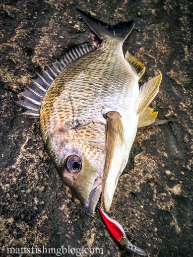 Narrabeen Lake 20150509 - 006